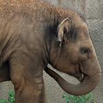 Легенды и незамысловатые истории о слонах