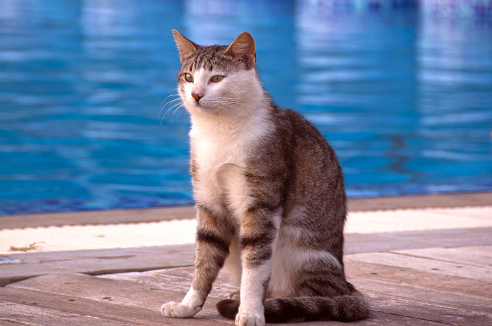 Кошка на Кипре