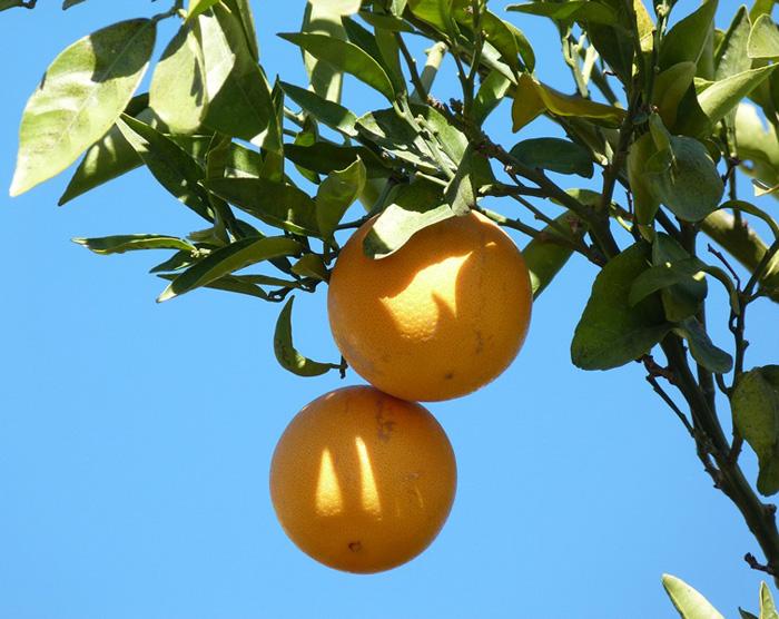 Мекнес. Небо в апельсинах